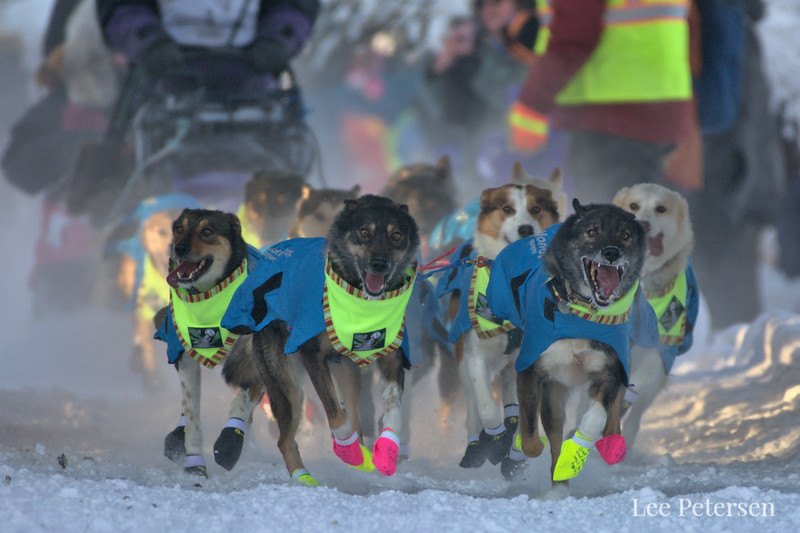 Michelle Phillips dog team starting the 2020 Yukon Quest in Fairbanks, Alaska